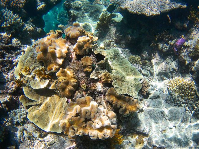 Underwater Sea Life Coral UnderSea Sea Water Nature Beauty In Nature No People Day Outdoors Soft Coral Ecosystem  ~ Greatbarrierreef Cairns, North Queensland, Australia