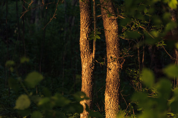 Close-up of tree trunks in forest
