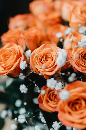 Focus On Foreground No People Growth High Angle View Flower Arrangement Orange Color Nature Close-up Rose - Flower Rosé Freshness Plant Vulnerability  Selective Focus Bouquet Flower Head Inflorescence Beauty In Nature Petal Flower Flowering Plant Fragility Outdoors Bunch Of Flowers Softness
