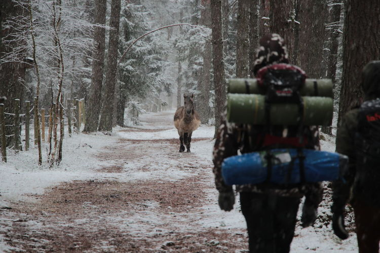 Hikers And Horse In Forest During Winter
