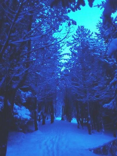 Forrest Snow