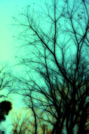 Art Light In The Darkness Backgrounds Blue Cloud - Sky EyeEm Awards 2016 Japan Photography Low Angle View Nature Nature_collection Sky Snapshots Of Life Tree 木