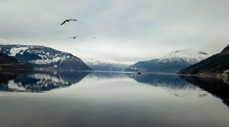 Fly Landscape_Collection Norway Scandinavia Water Reflections Beauty In Nature Bird Blue Cold Temperature Fjord Flying High Angle View Lake Landscape Mountain No People Reflection Scenics - Nature Sky Water Waterfront Winter