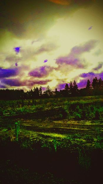 Wicked Awesome These Colors Dont Run Oregon Baby! Goodmorning EyeEm  Oregon Morning Cloudsporn Stormy Summer