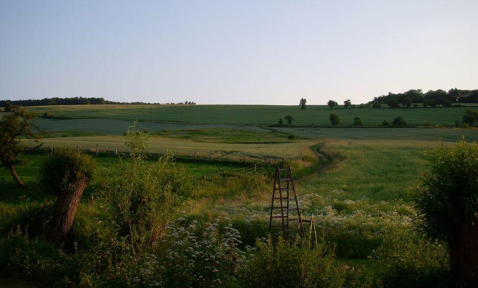 Clear Sky Field Grass Green Color Landscape Nature Tranquil Scene Uslar