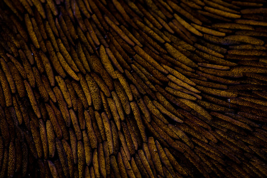 Buriti Flow  Indigenous Art Pattern Pieces Pattern, Texture, Shape And Form Shape Textured  Textures and Surfaces Backgrounds Close-up Extreme Close-up Indigenous  Indigenous Culture Indigenous People No People Organic Pattern Shapes And Forms Texture Textured  Wood - Material EyeEmNewHere
