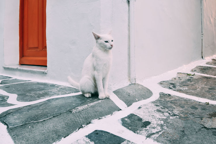 Animal Themes Architecture Cat Day Domestic Animals Domestic Cat Door Feline Looking At Camera Mammal No People One Animal Outdoors Pets Portrait Sitting Steps The Great Outdoors - 2017 EyeEm Awards The Portraitist - 2017 EyeEm Awards Pet Portraits
