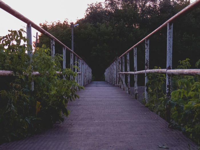 Narrow footbridge along trees and plants