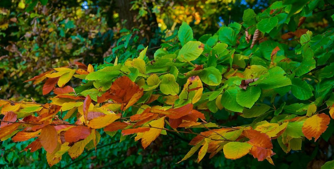 Autumn Leaves Autumn Colors Herbst Autumn Beauty In Nature Beauty In Nature Colorful Day Fränkische Schweiz Green Color Landscape Leaf Leaves Nature No People Outdoors Tree