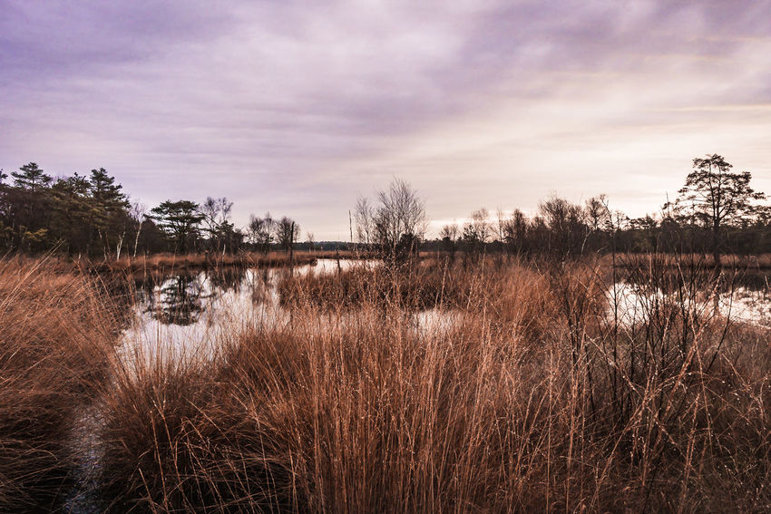 Ein herrlicher Morgen im Schneverdinger Pietzmoor Landscape Photography Landscape_Collection Lüneburger Heide Beauty In Nature Cloud - Sky Day Forest Grass Growth Lake Landscape Landscapes Marsh Nature No People Outdoors Plant Reflection Scenics Sky Tranquil Scene Tranquility Travel Destinations Tree Water This Is Masculinity EyeEmNewHere EyeEmNewHere