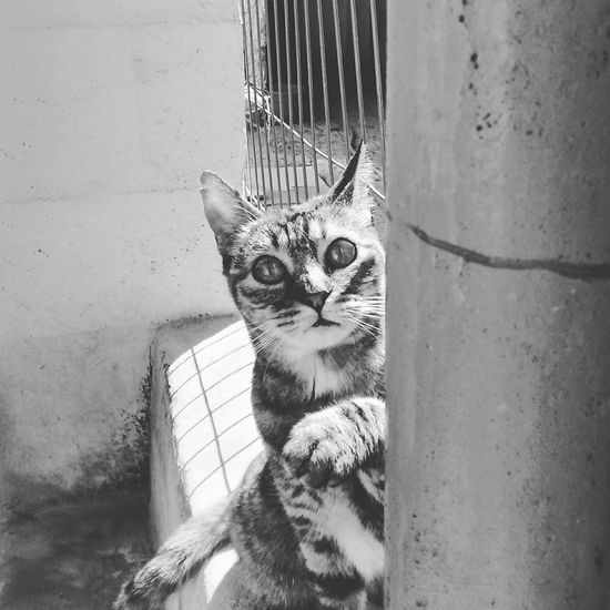 Stuar Nature_collection Cat Eyes Mycat Naturaleza Urbana First Eyeem Photo
