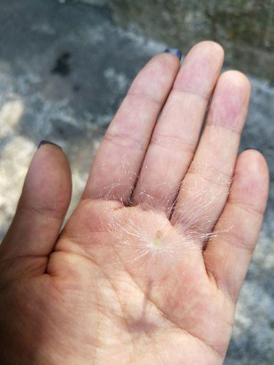 自然活著 生命延續生命 播種 Human Hand Palm Fingernail Human Finger Hand Close-up