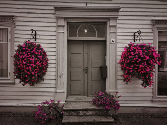 Black And Pink Norway Architecture Building Building Exterior Built Structure Closed Day Door Entrance Flower Flower Arrangement Flowering Plant Fragility Freshness Growth House Nature No People Outdoors Pink Color Plant Purple