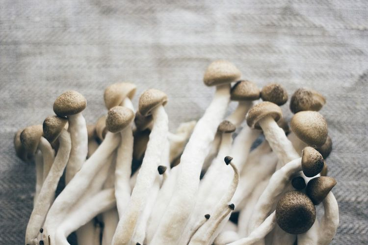 Bright Cooking Earth Earthy Farm Food And Drink Freshness Light Mushrooms Nature Tiny Brown Close-up Day Food Food Photography Fresh Ground Indoors  Ingredient Mushroom Nature Nature_collection No People Small