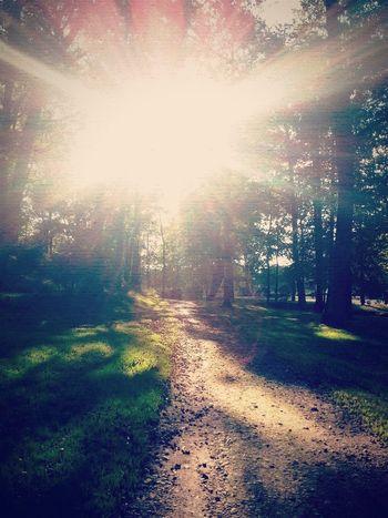 Sunshine Forest Path