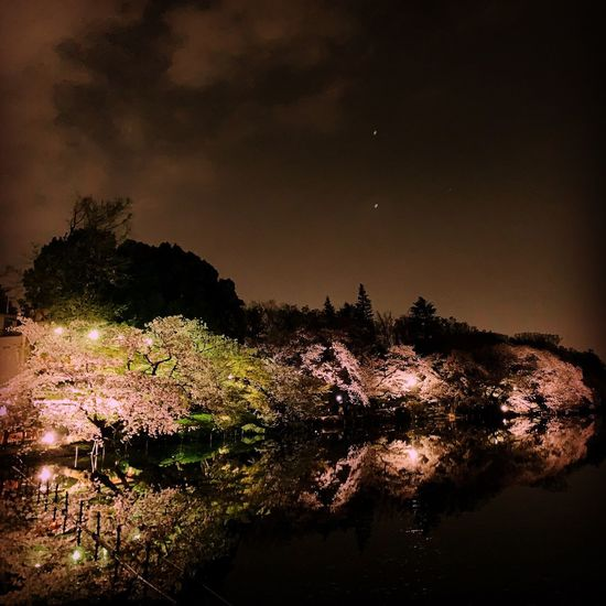 cherry blossoms and river River Cherry Blossom Tree Sky Night No People Plant Water Beauty In Nature Nature Scenics - Nature Outdoors Lake Reflection Growth Illuminated Environment Tranquility