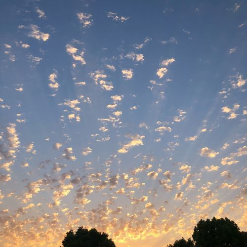 Cotton ball sky BeautifulEvenings Californialiving Augustsky Sunset Sky Sunset Beauty In Nature Cloud - Sky Tree Low Angle View Tranquility Tranquil Scene Sunlight Outdoors Silhouette Scenics - Nature Nature