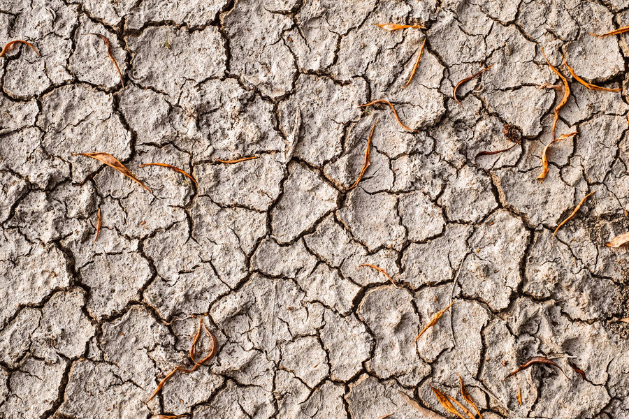 Dried earth with cracks on summer sunny day Earth Cracks Arid Climate Backgrounds Brown Close-up Crack Cracked Cracked Earth Cracked Ground Day Dried Earth Dried Mud Drought Dry Environment Full Frame Geology Heat - Temperature Land Mud Nature No People Outdoors Pattern Rough Summer Textured