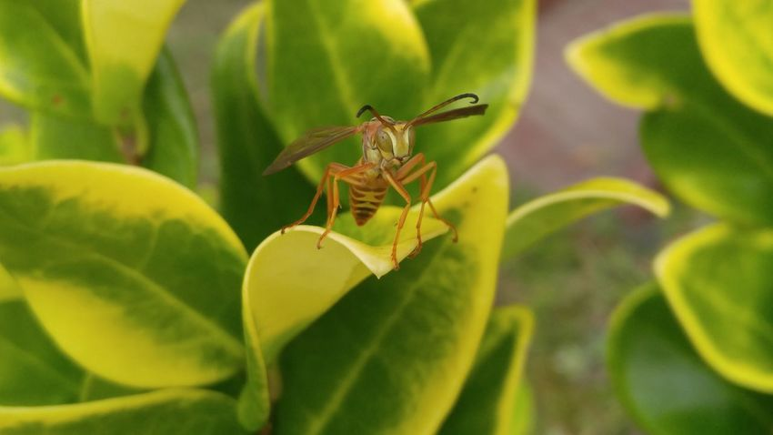 Insect Animals In The Wild Animal Wildlife Leaf Nature Animal Themes No People Close-up One Animal Outdoors Plant Green Color Day Full Length Beauty In Nature Perching Flower Freshness EyeEmSelect