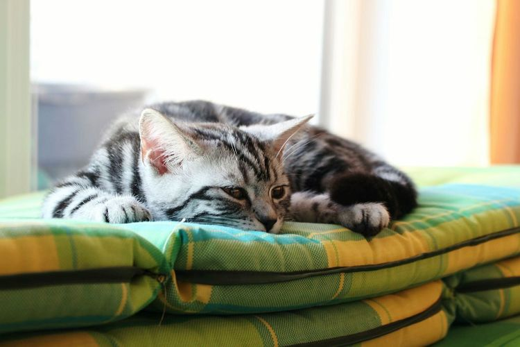 Cat relaxing on bed by window at home
