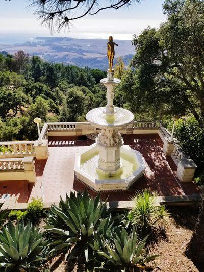 Fountain Tree