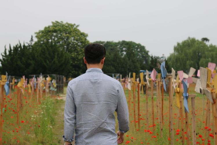 Rear view of man walking amidst poppy flowers and wooden pinwheels on field