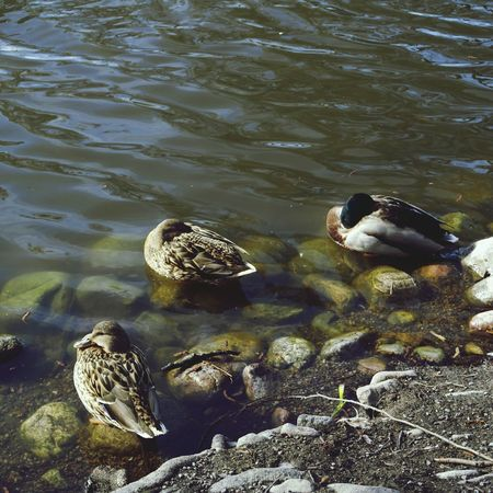 Nap Time EyeEm Birds Enjoying The Sun Nature_collection