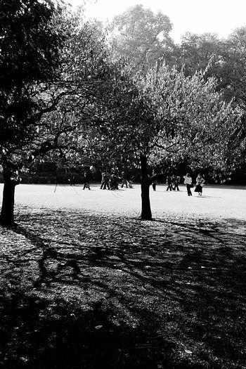 Shinjuku Gyoen National Garden Autumn2016 Tokyoautumn2016 TokyoNov2016 Tokyopark japan Shadowandlight Treesandbranches