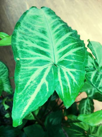 Leaf Green Color Nature No People Plant Close-up Outdoors Day Beauty In Nature