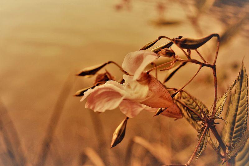 Entspannung am See im Sonnenuntergang Abend Allee Bäume Entspannung EyeEm EyeEm Best Shots EyeEmBestPics Frieden Herbst Sommerende Sonnenaufgang Sonnenuntergang Steg Stimmungsbild Hofi Wiese  Abendrot Abendstimmung Blumenpracht🌺🍃 Eyeemfirstphoto Grass Area Herbstblätter See Stille Teich Wasser