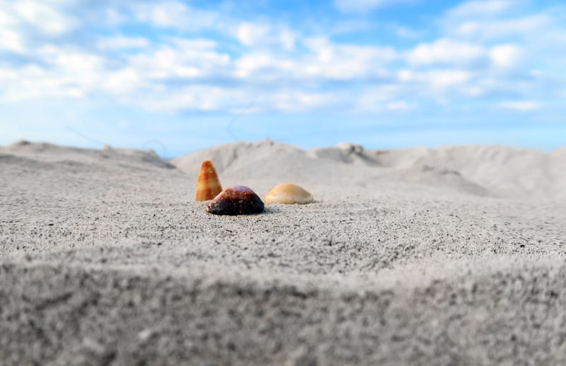 Surface level of animal shells on sand against sky