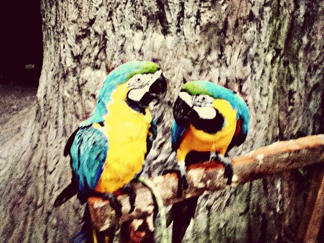 Parrots Macaw Hello World