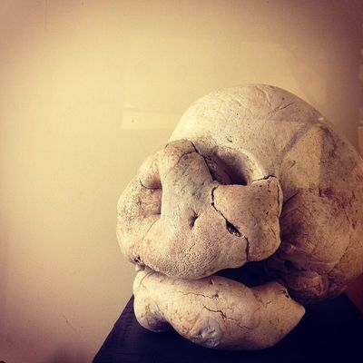 #monsterlife #skull #abnorm #bones #museicivici #reggioemilia #reggionarra #lifelessordinary #webstapic #meshpics #instalife