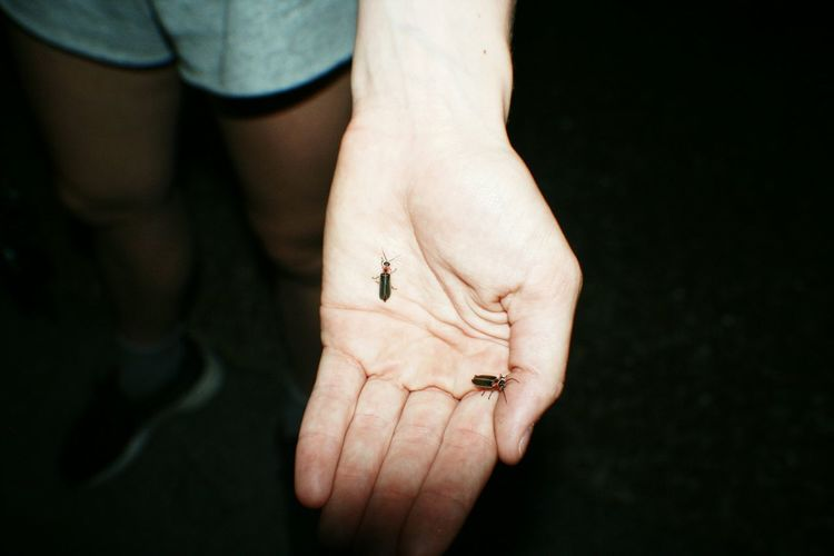 Insects on human hand
