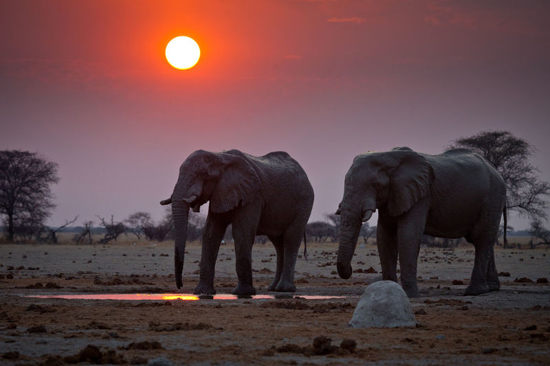 View of elephant on field against sky during sunset