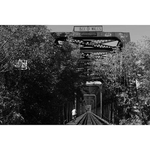 Ottawa 613 City Ontario canada blackandwhite blackandwhitephotography monochrome monochromephotography instablackandwhite instagood instalove igers tweegram life pic capture photogram pics instagram snapshot picture composition bridge nature beautiful