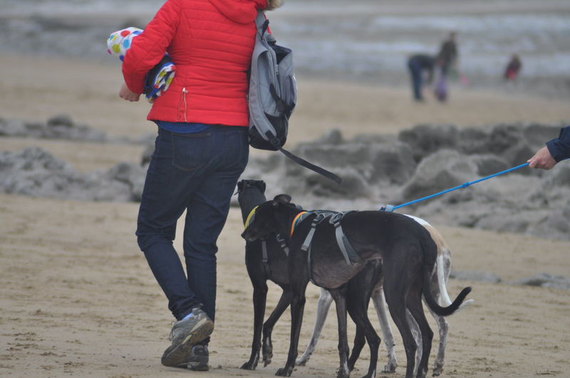 Animal Dog Domestic Animals One Animal Pets Animal Themes Mammal People Adult Day One Person Adults Only Warm Clothing Outdoors Nature One Man Only Only Men Beach Beach Life Greyhounds