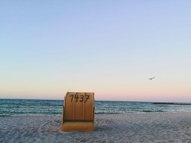 Ostseeküste möwe