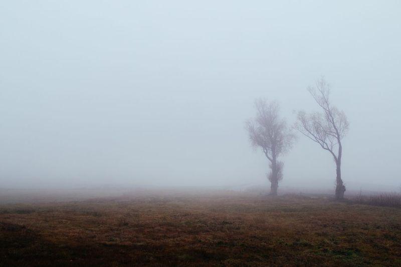 Kashubian Foggy