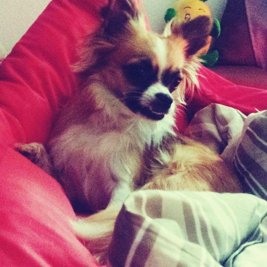 Love Baby Piesek Happy Einundalles Grosseliebe Hund Liebe Du Kochanie