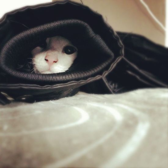My Cat Buck In The Jacket LOL Fun Funnypics Cat Cats Animals Love Them Crazy 420 Bjorngruppen Dutch