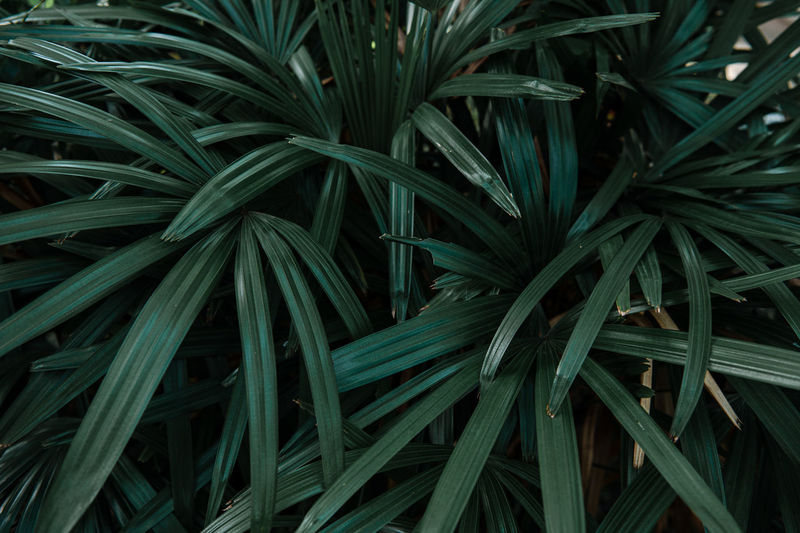 Close-up nature view of green leaf background and palm trees
