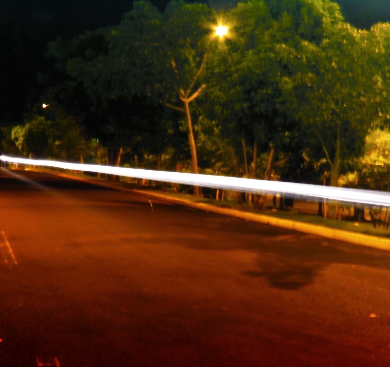 LIGHT TRAILS ON ROAD BY TREES AT NIGHT