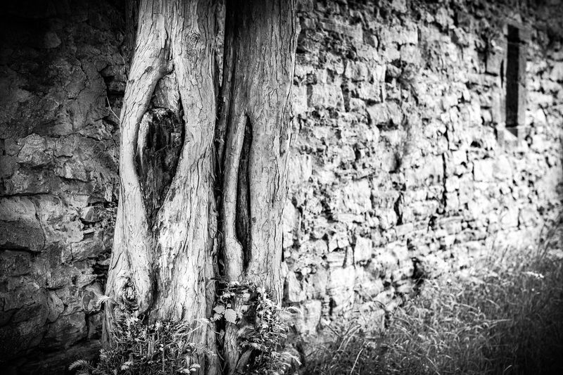 Backgrounds Black & White Burg Hohennagold Castle Close-up Day Female Full Frame Knotted Wood Medieval Nature No People Outdoors Southern Germany Textured  Tree Weathered Wood - Material