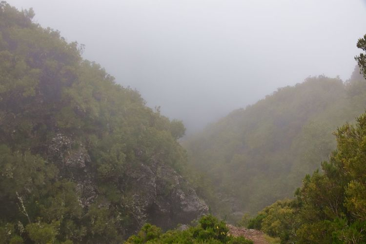 Hiking in the clouds Fog Tree Plant Beauty In Nature Tranquility Tranquil Scene Scenics - Nature Nature Environment No People Day Non-urban Scene Mountain Growth Land Sky Green Color Outdoors Landscape Hazy  Cloud Forest Hiking Walking Hills Hillside Tree Tree Area Mist Misty Madeira Island Volcanic Landscape The Great Outdoors - 2019 EyeEm Awards