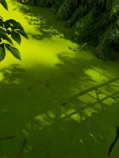 Ombre de la passerelle Green Color Water Nature Plant Tranquility No People Growth Tranquil Scene Beauty In Nature