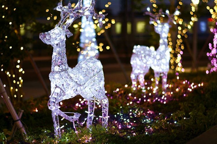 Japan Tokyo Lighting Electronic Spectaculars Reindeer Merry Christmas Cristals