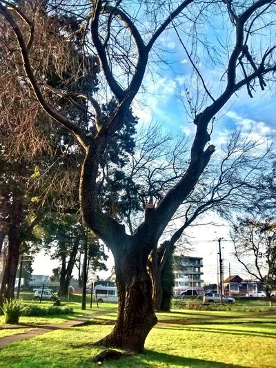 Arbolito 🌲 Tree_collection  Tree And Sky Sky Season  Winteriscoming Green Otoño 🍁 Chile♥ Square Enjoying Life