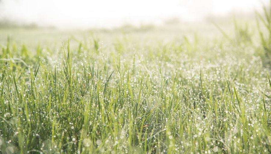 Plant Field