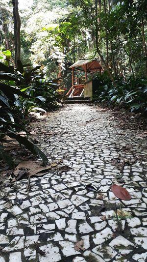 Park São Paulo Urban Playground Tree